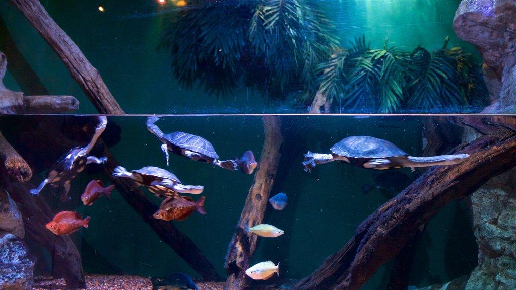 Adventure Aquarium featuring marine life and interior views
