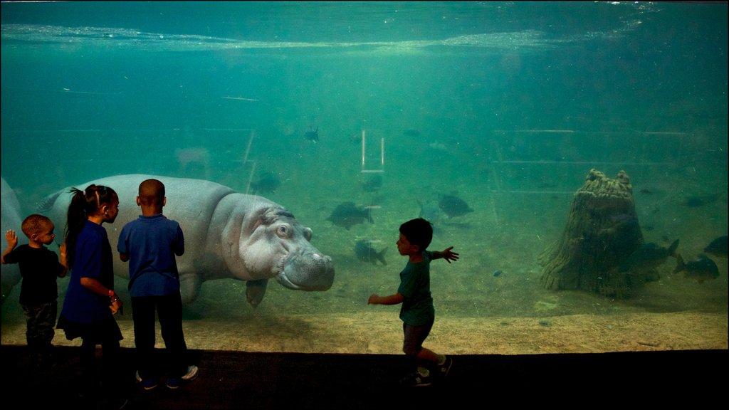 Adventure Aquarium featuring interior views and marine life as well as children