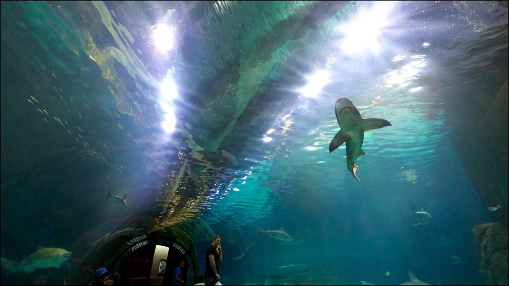 Adventure Aquarium which includes interior views and marine life as well as a small group of people