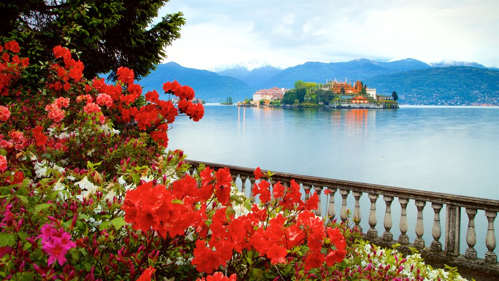 Stresa which includes a small town or village, flowers and a lake or waterhole