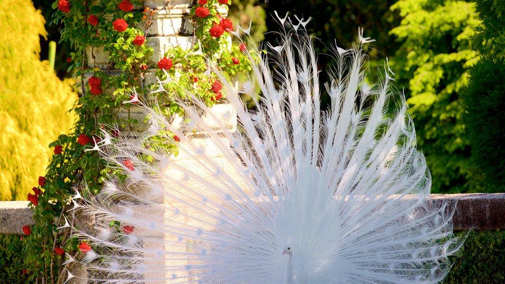 Isola Bella Botanical Garden showing bird life and wildflowers