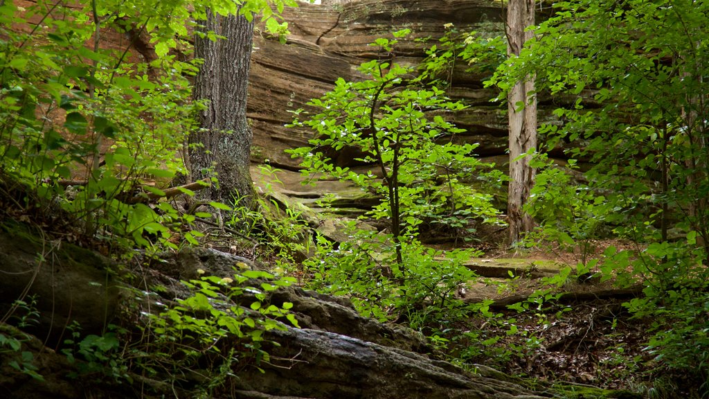 Ha Ha Tonka State Park showing forest scenes