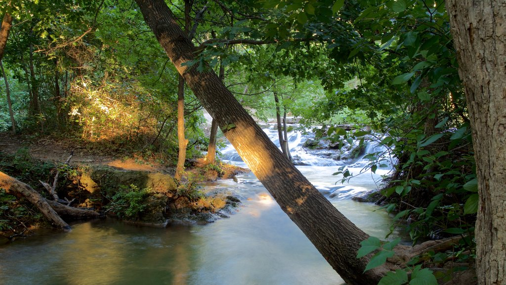 Chickasaw National Recreation Area featuring a river or creek and forests