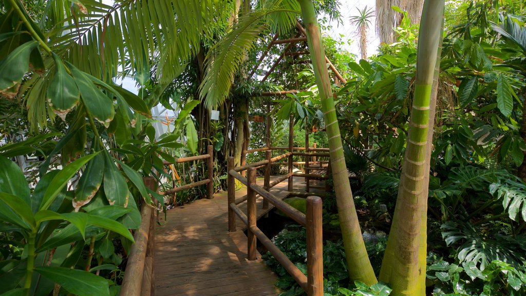 Myriad Botanical Gardens showing a park