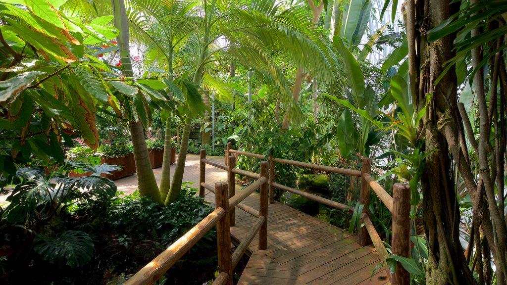 Myriad Botanical Gardens which includes a park
