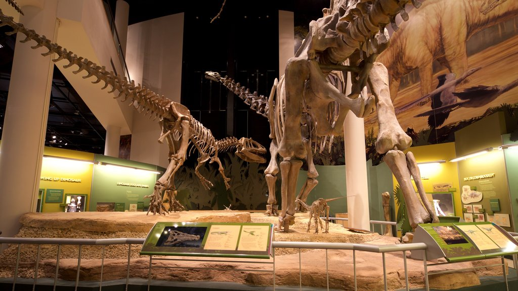 Sam Noble Oklahoma Museum of Natural History which includes interior views and signage