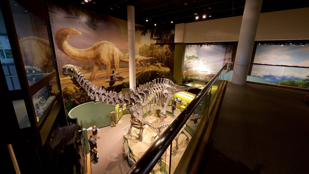 Sam Noble Oklahoma Museum of Natural History showing interior views