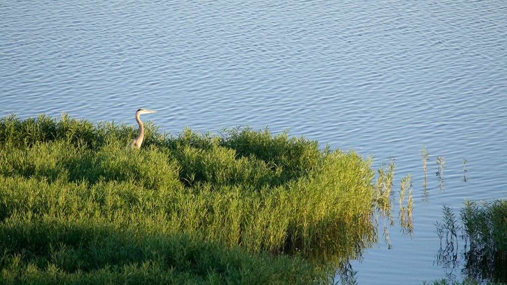 Veteran\'s Lake which includes a lake or waterhole and bird life