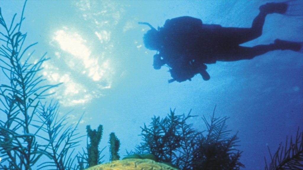 Corpus Christi showing tropical scenes, diving and colorful reefs