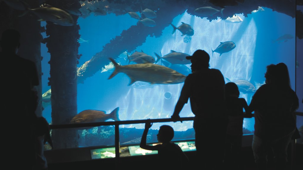 Corpus Christi showing interior views, colorful reefs and marine life