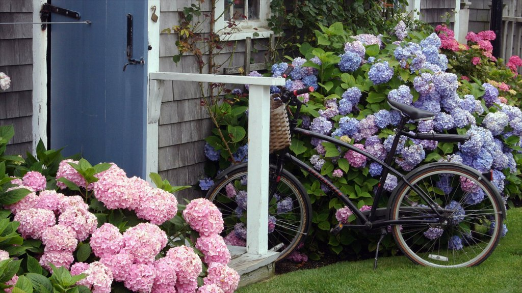 Nantucket showing a park, a house and flowers