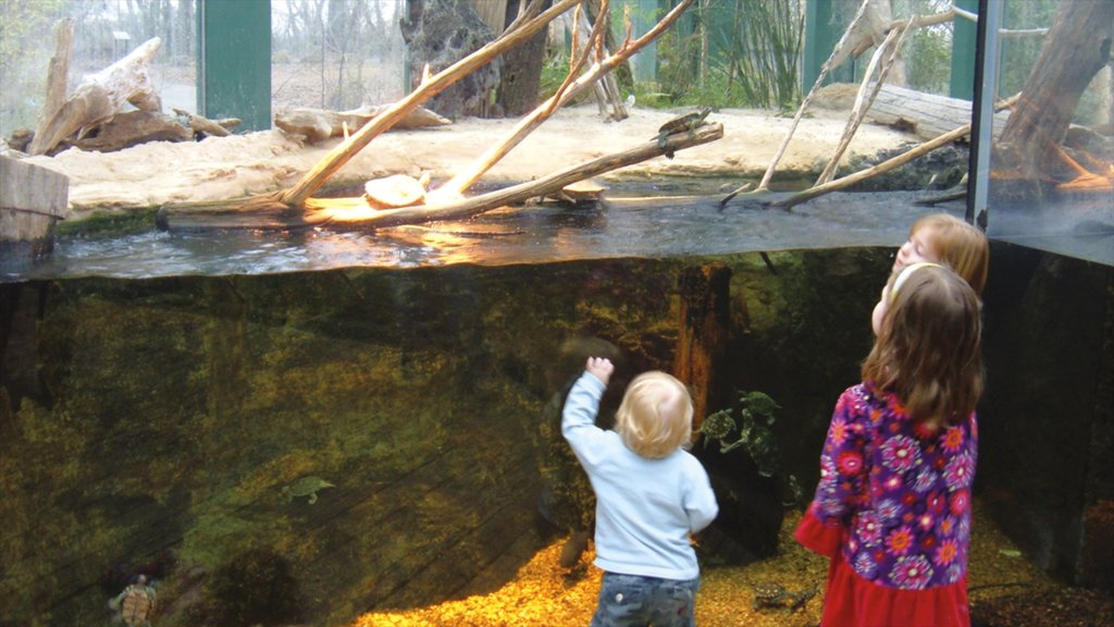 Jackson showing marine life and interior views as well as children