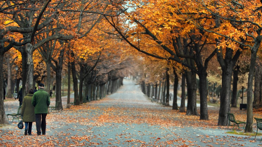 Bastions Park featuring autumn leaves, forest scenes and a park