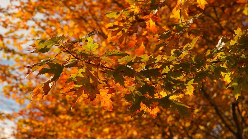Millennium Park which includes autumn leaves and a park