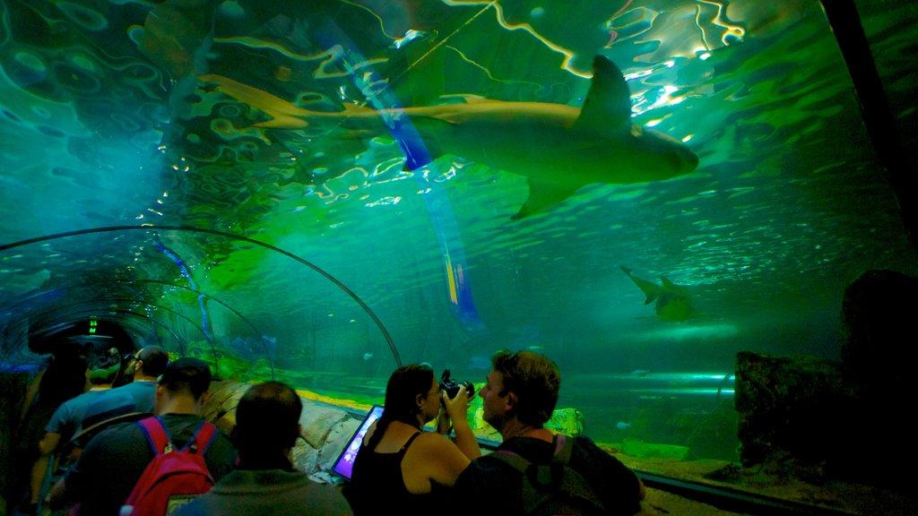 Sídney mostrando vida marina y vistas interiores y también un pequeño grupo de personas