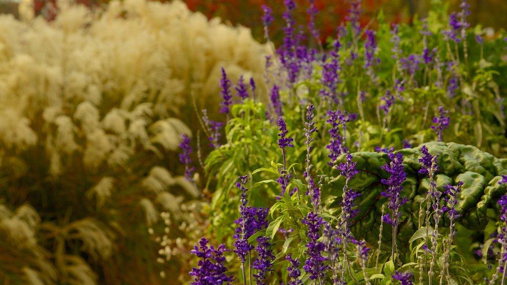 Lincoln Park Zoo que incluye flores silvestres, un jardín y flores