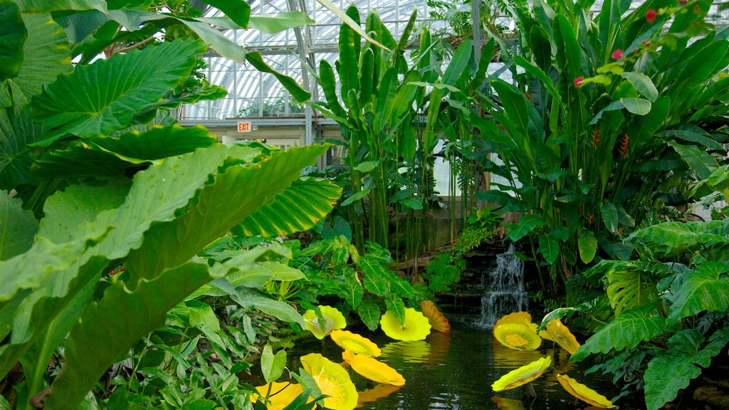 Garfield Park Conservatory showing interior views, a garden and flowers