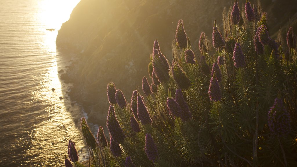 Pfeiffer Big Sur State Park que incluye flores silvestres, flores y vistas de paisajes