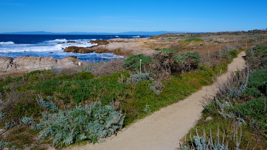 Asilomar State Beach which includes landscape views, tranquil scenes and tropical scenes