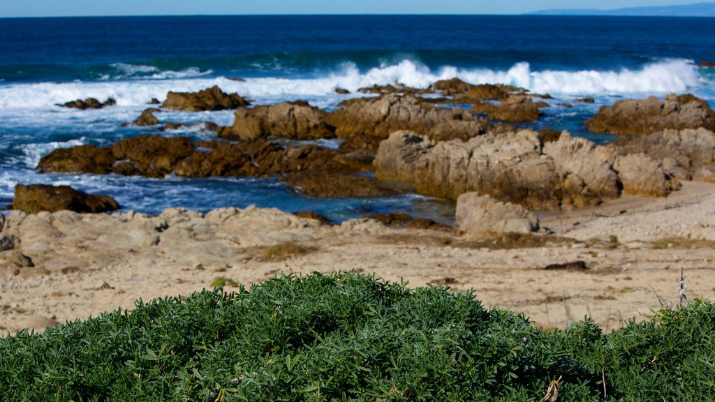Asilomar State Beach showing landscape views, rugged coastline and waves