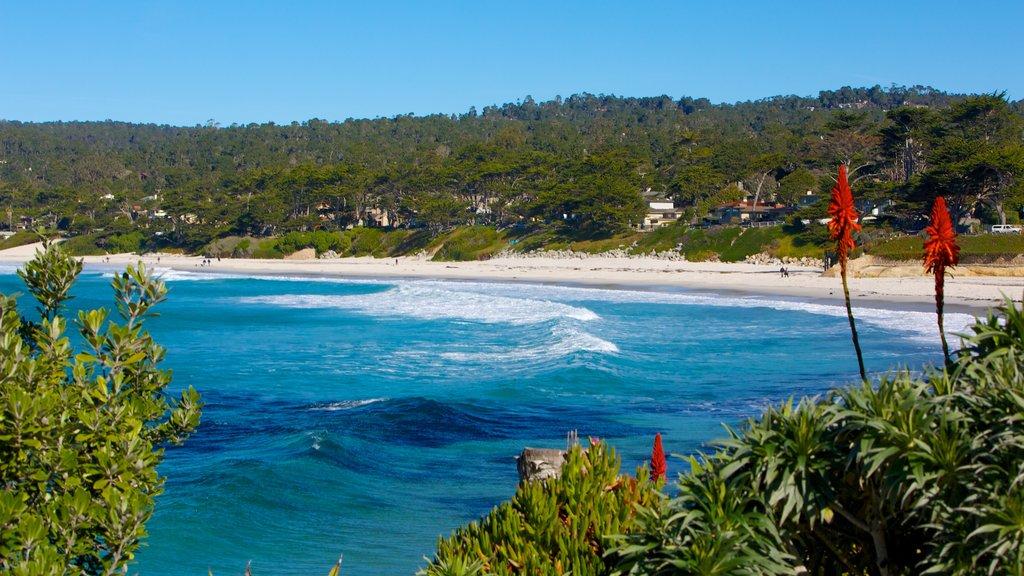 Carmel Beach which includes landscape views, general coastal views and a sandy beach