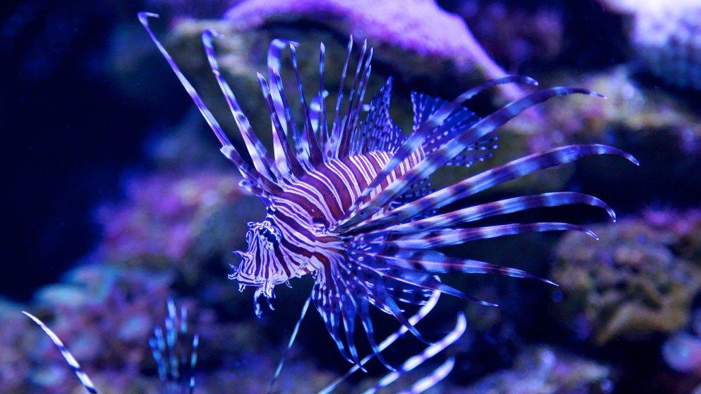 Acuario Interactivo showing marine life