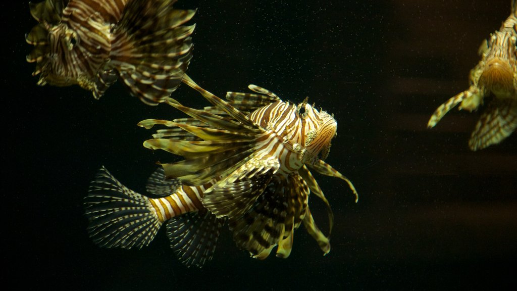 Acuario Interactivo which includes marine life