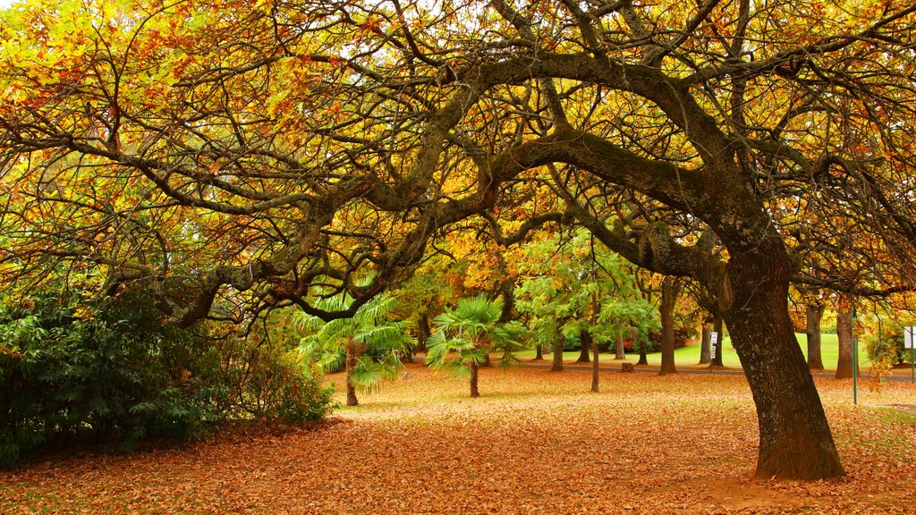 Beechworth showing autumn leaves and a park