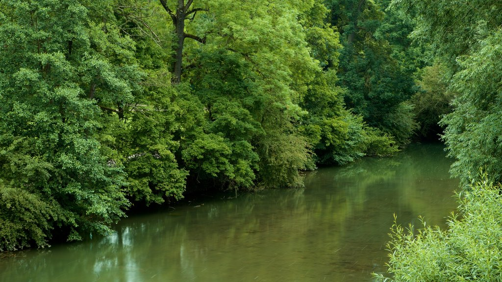 Park an der Ilm which includes a river or creek