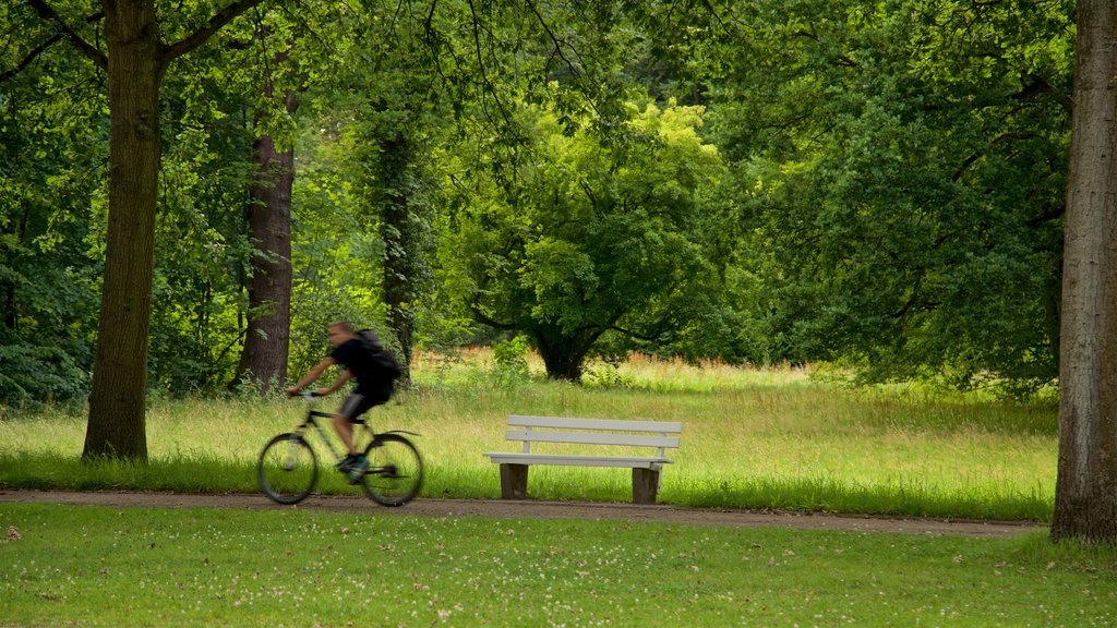 Karlsaue Park featuring cycling and a garden as well as an individual male
