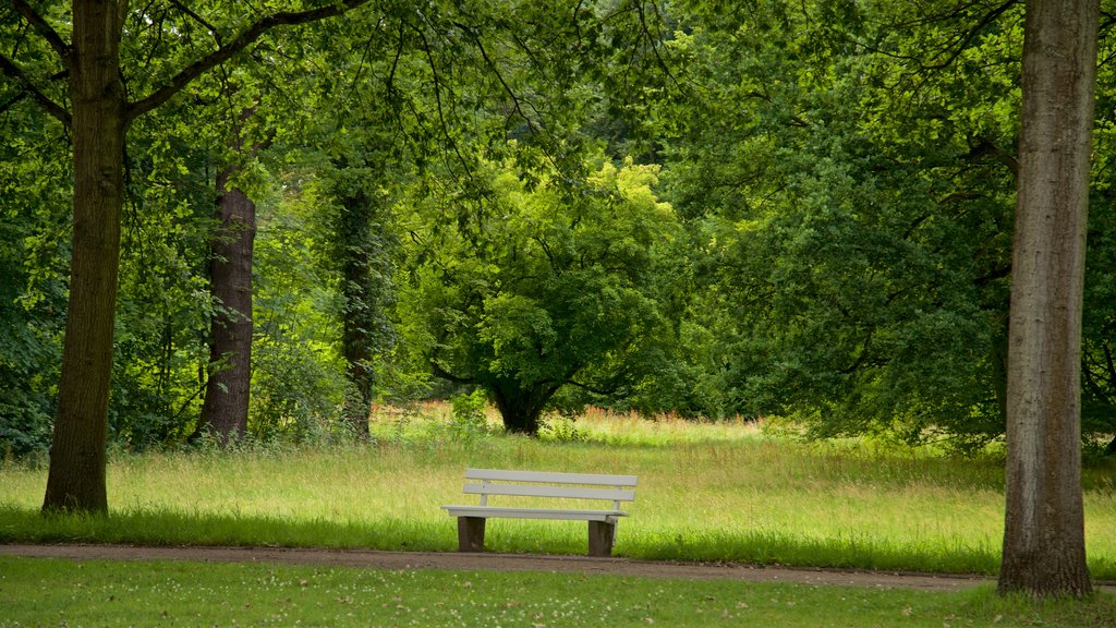 Karlsaue Park featuring a garden