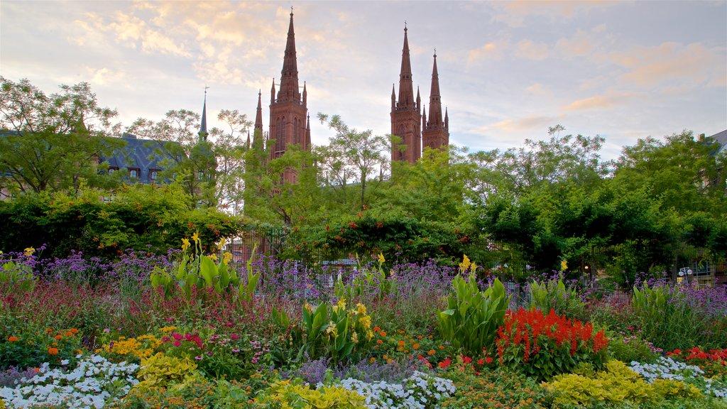 Marktbrunnen featuring a sunset, flowers and a park