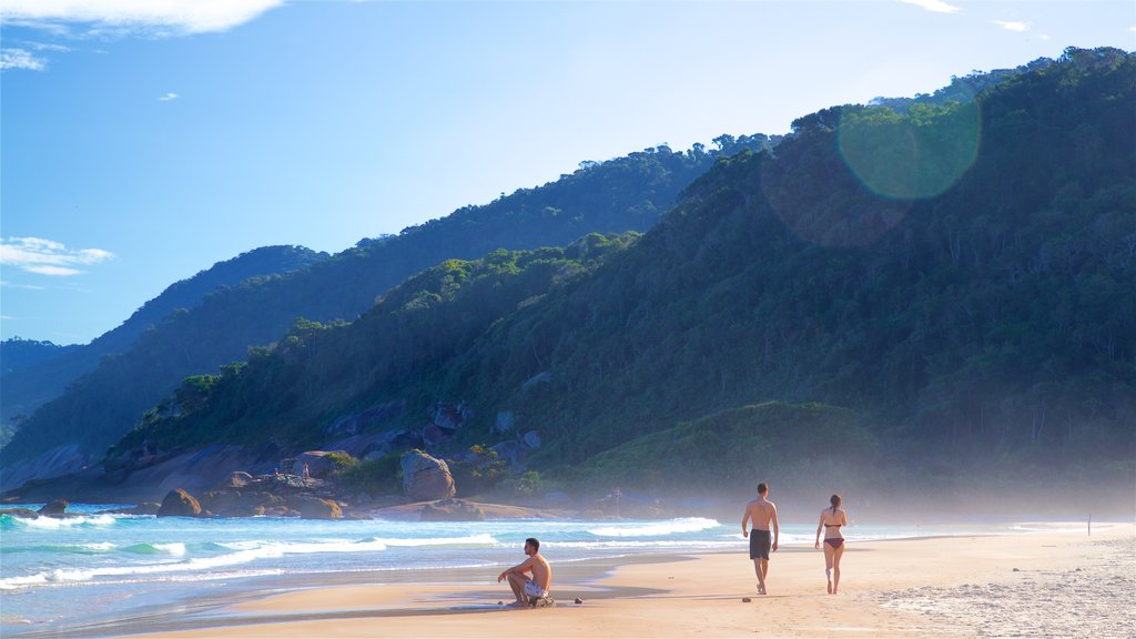 Lopes Mendes Beach showing tropical scenes, general coastal views and a beach