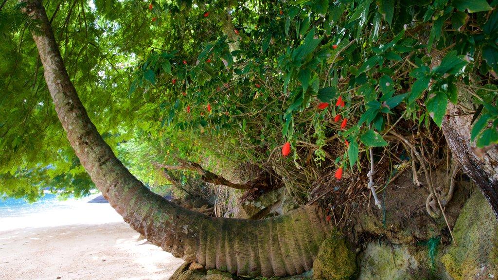 Praia de Japariz caracterizando cenas tropicais, uma praia de areia e flores silvestres