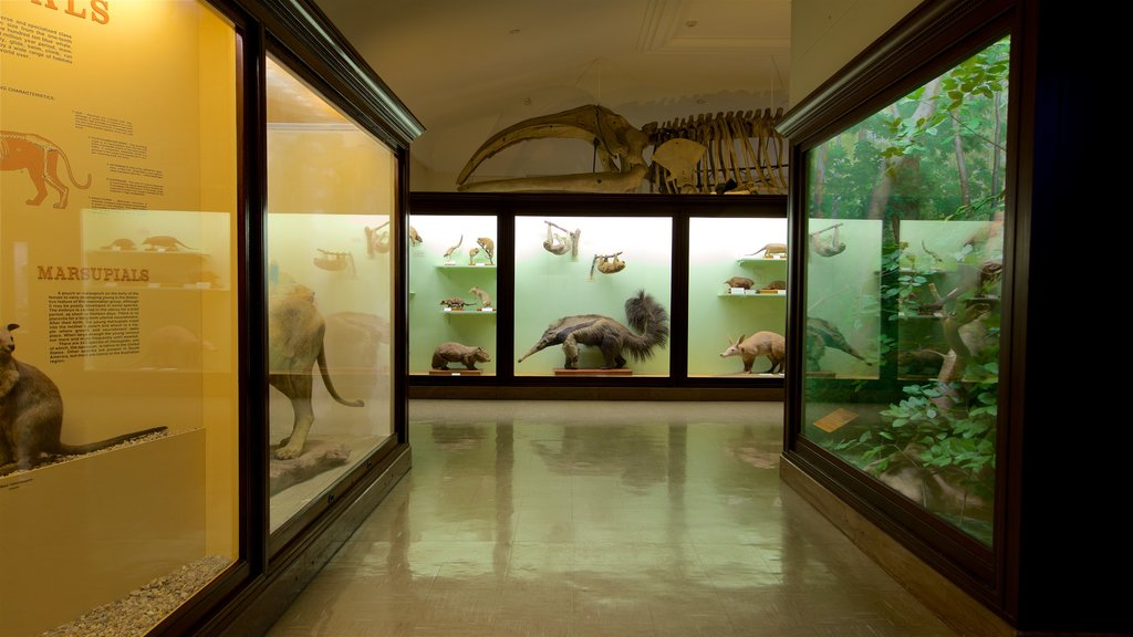 Iowa Museum of Natural History showing interior views
