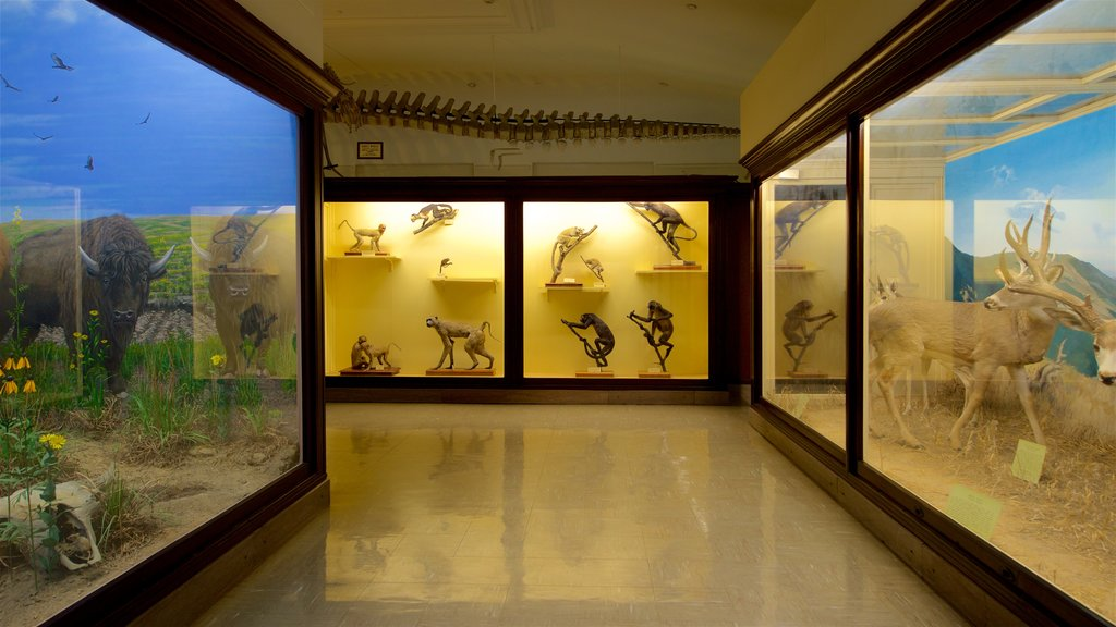 Iowa Museum of Natural History which includes interior views