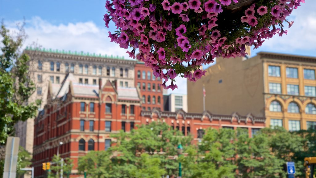 Syracuse showing a city and flowers