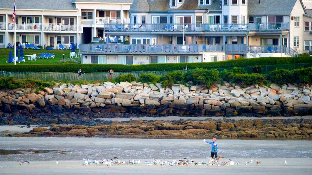 Ogunquit Beach featuring a coastal town and bird life as well as an individual male