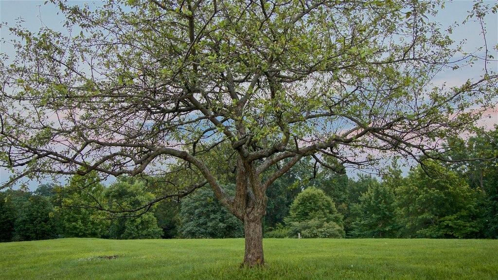 Highland Park featuring a garden