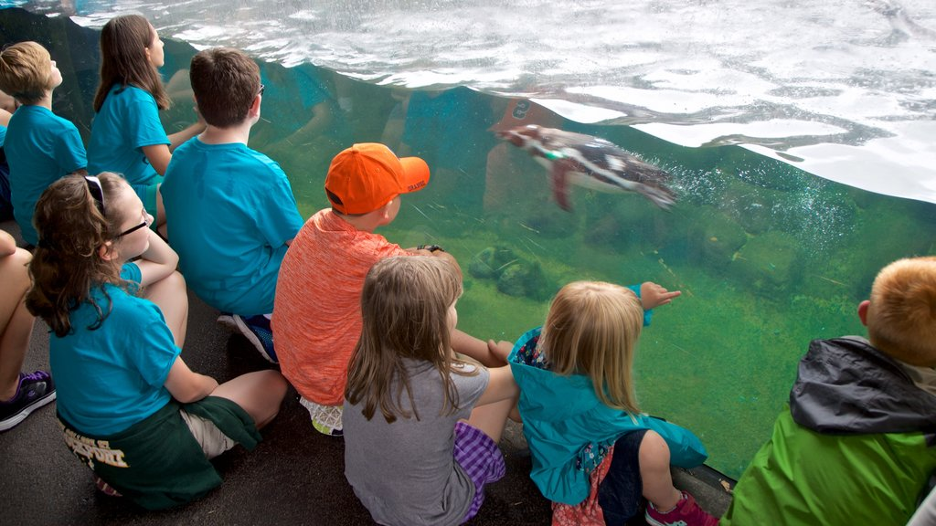 Rosamond Gifford Zoo showing marine life as well as children