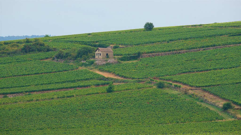 Beaune showing farmland, landscape views and a house
