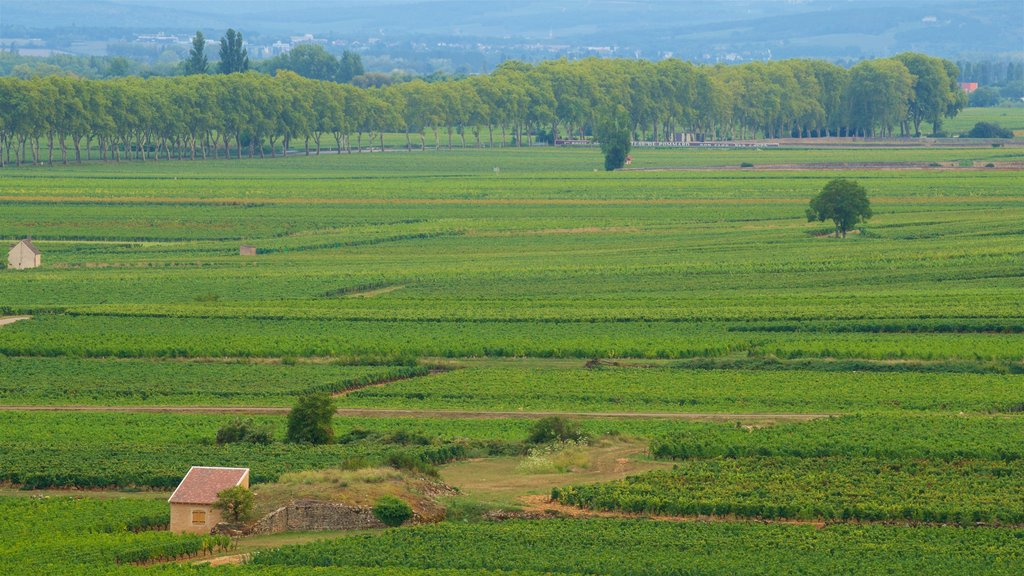 Beaune which includes landscape views and farmland