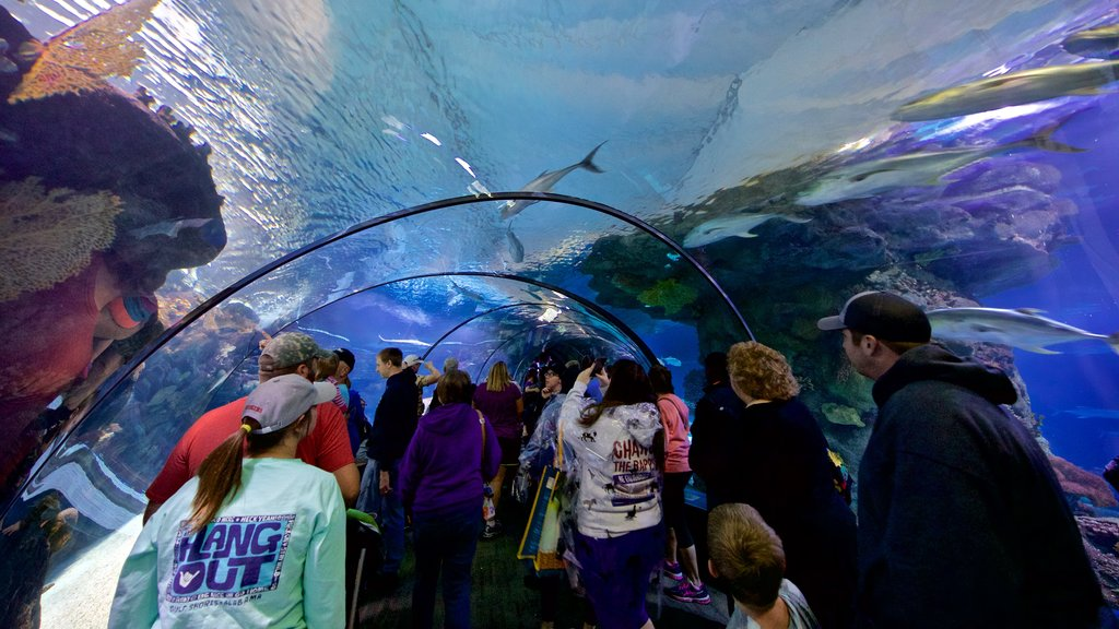 Henry Doorly Zoo featuring interior views and marine life as well as a small group of people