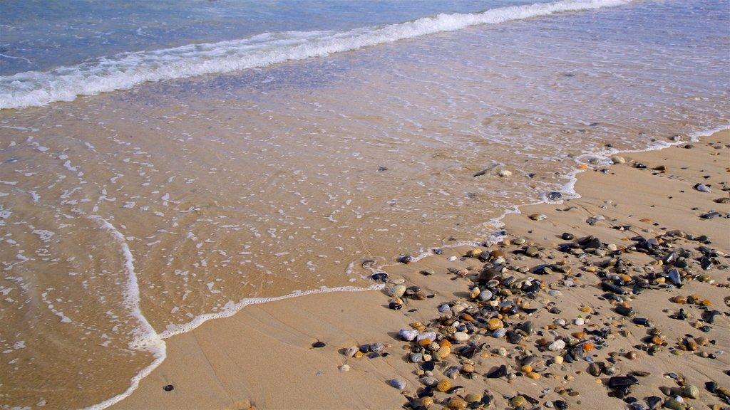 Scarborough Beach State Park featuring a sandy beach and general coastal views