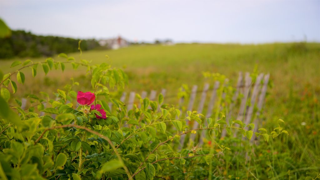 Scarborough Beach State Park showing tranquil scenes and wildflowers