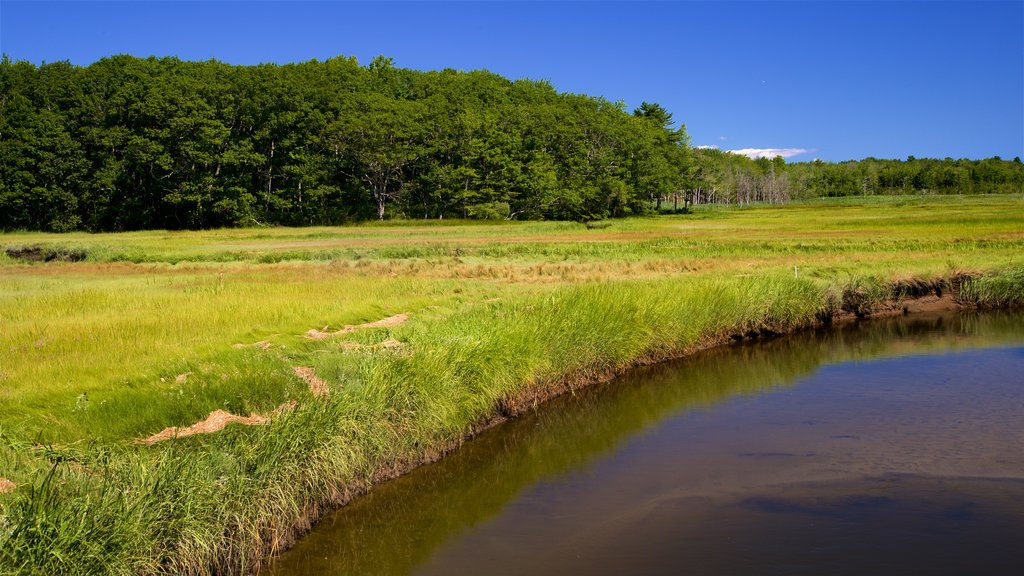 Scarborough showing tranquil scenes and wetlands