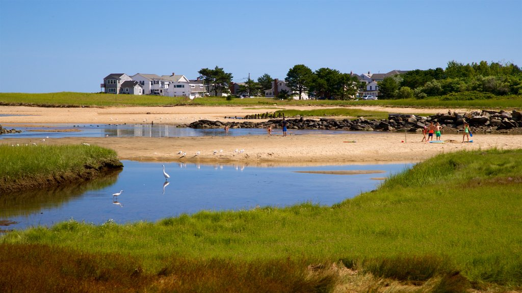 Saco showing general coastal views and a sandy beach as well as a small group of people