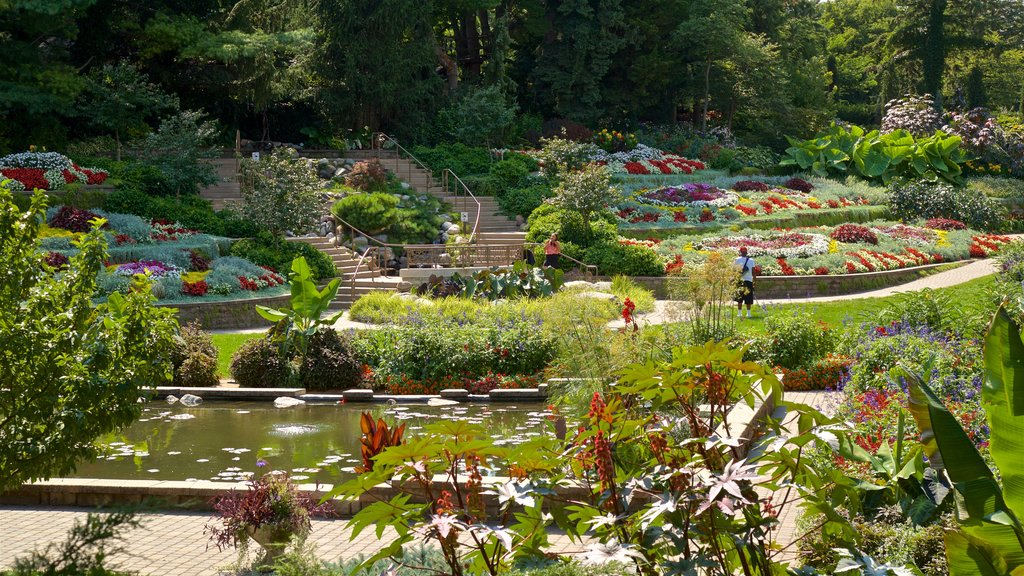 Sunken Gardens featuring a park, wildflowers and a pond