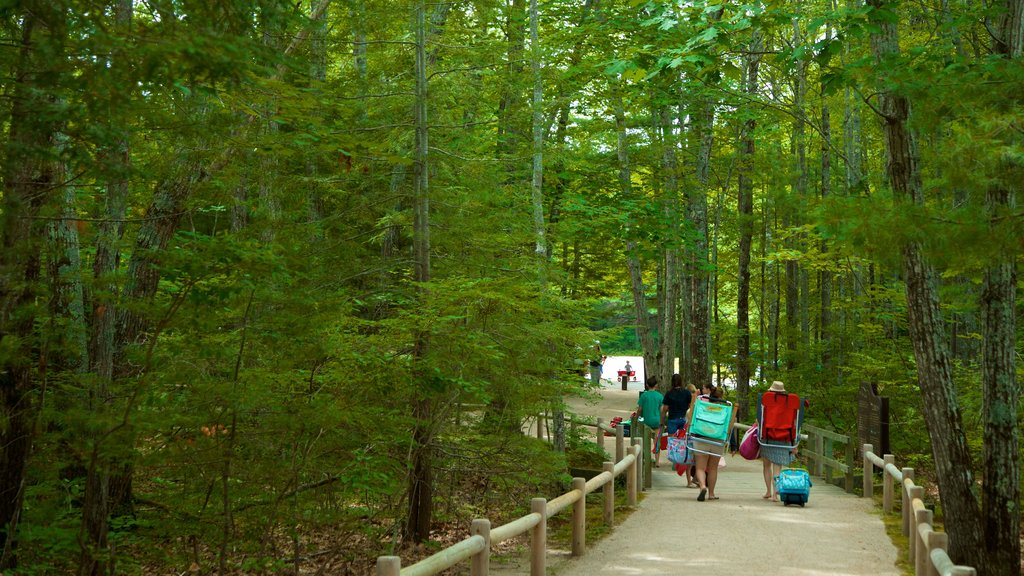 Ferry Beach State Park featuring forests as well as a small group of people