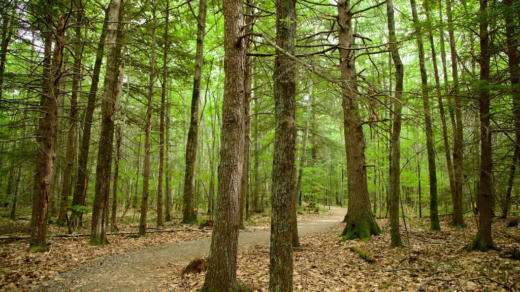 Ferry Beach State Park featuring forest scenes